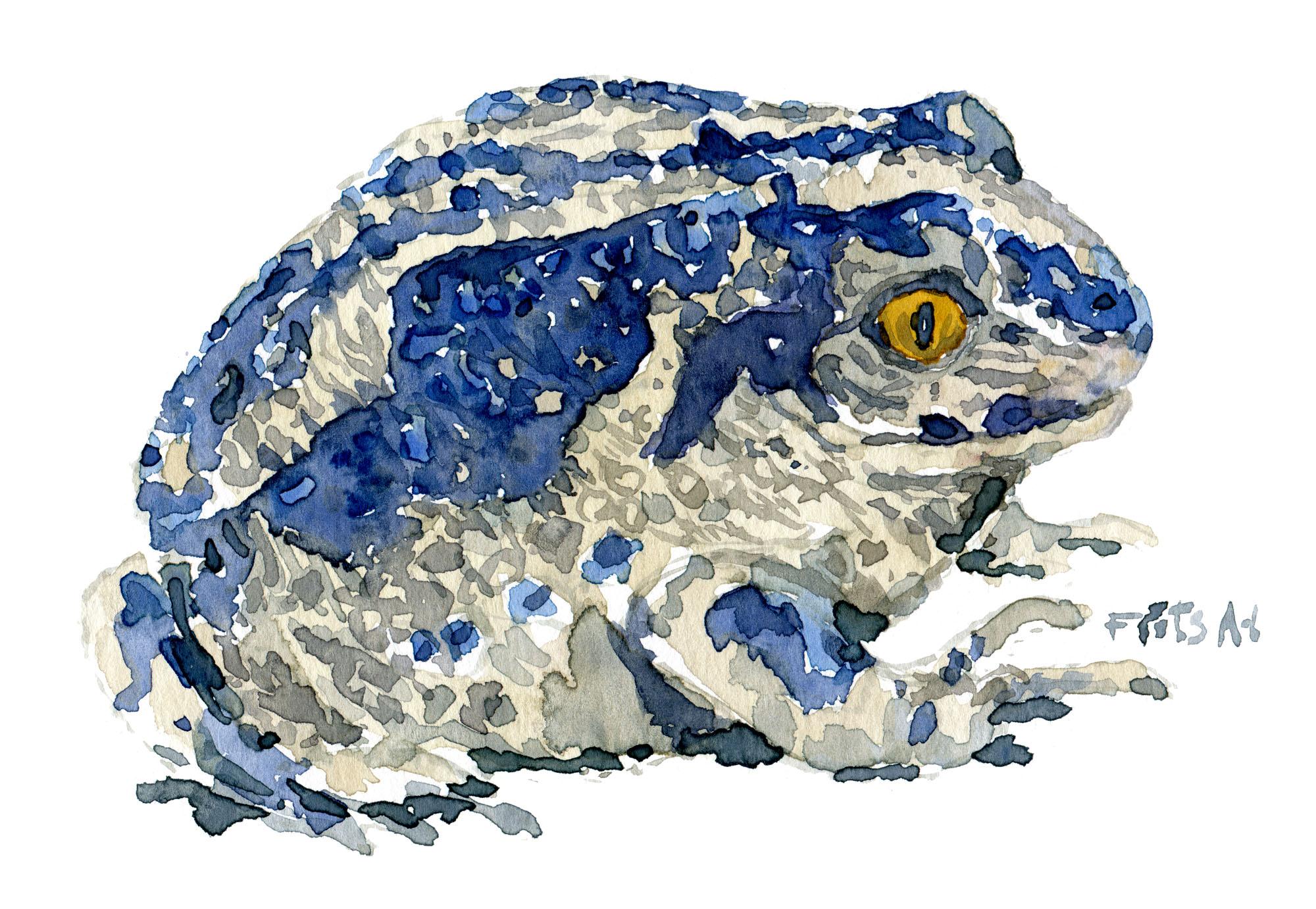 Akvarel af Løgfrø