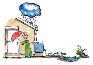 Tværsnit af regnvand til biodiversitet