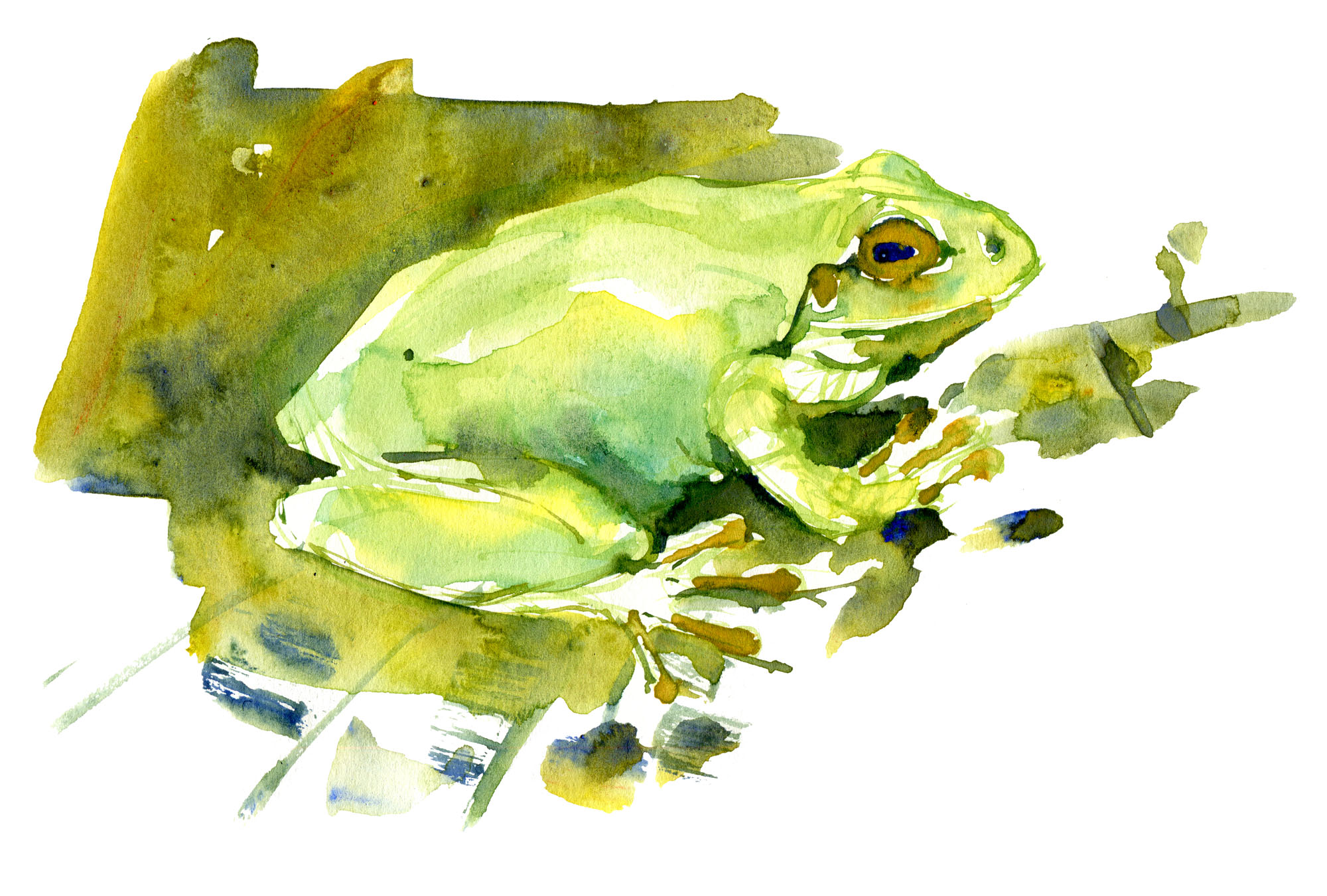 frog-watercolor-by-frits-ahlefeldt