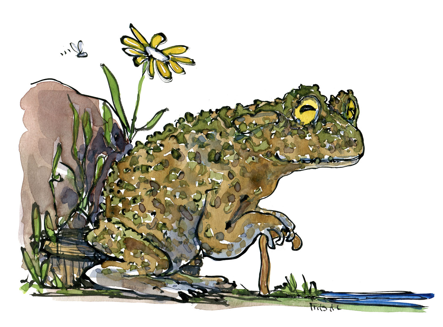 old-toad-frog-watercolor-sitting-on-bench-by-frits-ahlefeldt